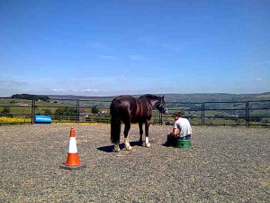 A participant and horse Teddy sharing a reflective moment in the round pen on a beautiful sunny day