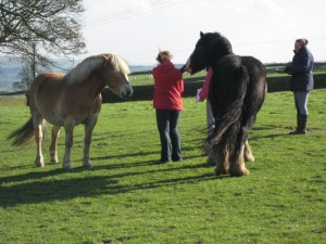 Participants on a horse wisdom workshop with 2 of the healing herd