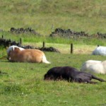 The horses are waiting. Experience our How Horses Heal Humans workshop