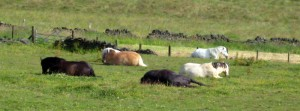 The horses are waiting.  Experience our Horses, Heart and Healing workshop