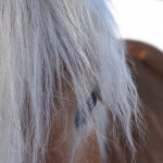 Empower your life through the Wisdom of the Horse workshop.