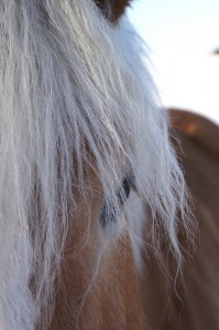 Horse Wisdom