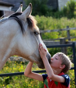 A child kissing a horses nose